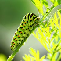 How long does it take a caterpillar to climb a tree?